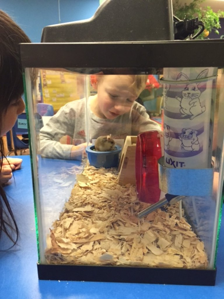 The preschoolers have a new classmate! Meet Bucky the Hamster!